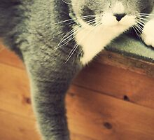 Cat by Anne Staub