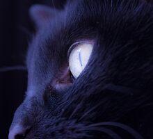 Black cat eye by GemaIbarra