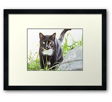 Tux the Kitty Cat Framed Print
