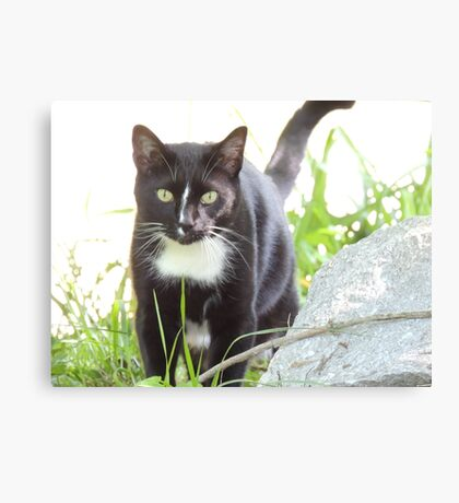 Tux the Kitty Cat Canvas Print