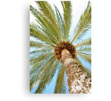 Palm tree Canvas Print