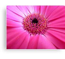 Essence of Pinkness - Pink Gerbera Closeup Canvas Print