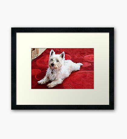 Archie At Christmas Framed Print