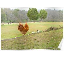 Watching over the Hens Poster