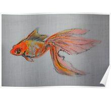 Goldfish Pond ( close up #9) Poster