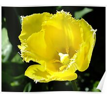 The Yellow Tulip Poster