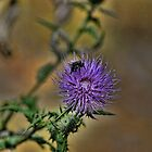 Thistle While They Work by Rick  Friedle