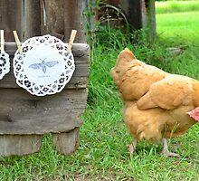 Perplexed Hen by mychickens