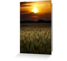 Wheat field at sunset, sun in the frame Greeting Card