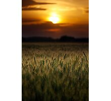 Wheat field at sunset, sun in the frame Photographic Print