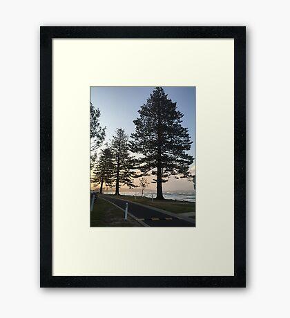 Trees! Framed Print