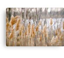 Reeds of Winter Metal Print