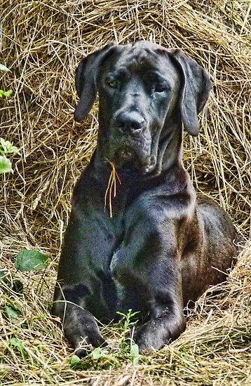 Elsie In The Hay by lynn carter