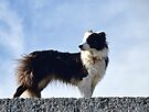 Rosie On The Harbour Wall by lynn carter