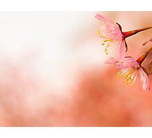 Cherry lossom Photographic Print