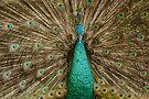 Bird of Paradise by Werner Padarin