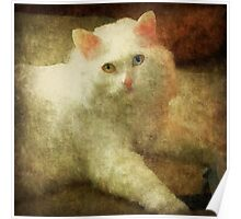 Vintage Kitty Cat Poster