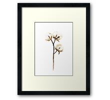Cotton White Brown Beige Watercolor Painting Flower Poster Framed Print
