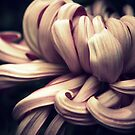 Chrysanthemum Curls by Jessica Jenney