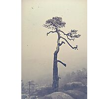 A single tree Photographic Print