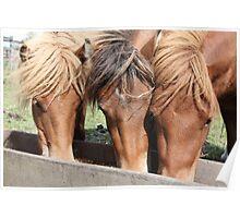 Feeding Horse Poster