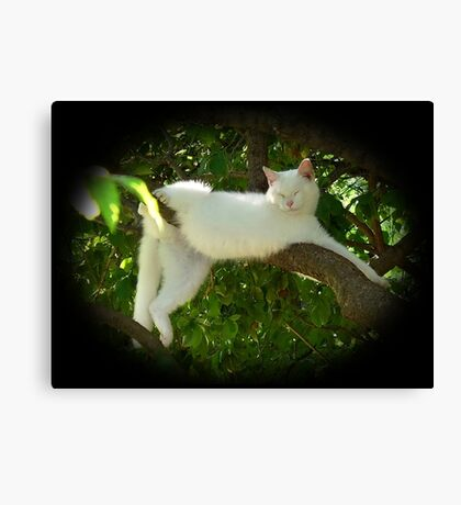 Lazy Twisted Cat-robatic Cat-tortionist Kitty Canvas Print