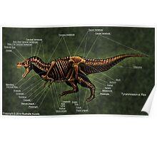 Tyrannosaurus Rex Skeleton Study Poster