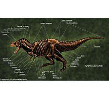 Tyrannosaurus Rex Skeleton Study Photographic Print