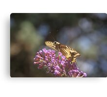 Nectar of Life Canvas Print