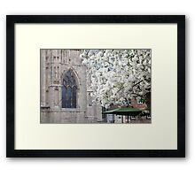 York Minster and the Blossom Tree Framed Print