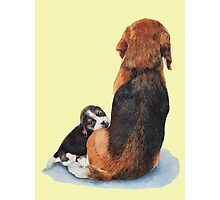 beagle puppy dog and mum Photographic Print