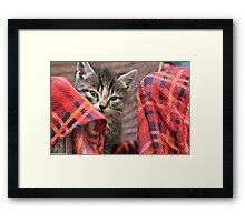 Little fluffy kitten muzzle Framed Print