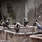Crows Of Mumbai by Leslie  Hagen
