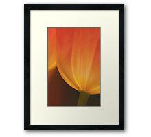 Translucent Tulips Framed Print