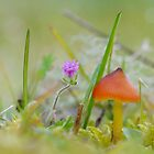 Blackening Waxcap by relayer51