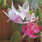 Christmas Cactus by trueblvr