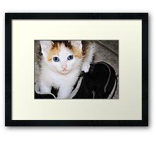 Who, Me? Framed Print