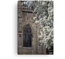 York Minster and the Blossom Tree Canvas Print