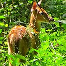 Fawn in the Woods by lorilee