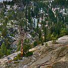 Eagle Falls Trail by Robin Black