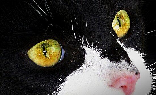 Eye Catcher by Josie Jackson