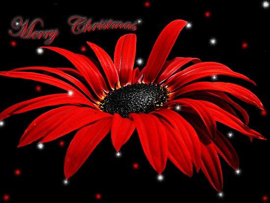 Merry Christmas(4) by Josie Jackson