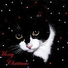 Merry Christmas (2) by Josie Jackson