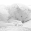 Dreamtime by Scott Mitchell
