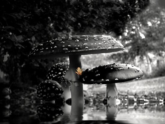 After the Rain by Josie Jackson