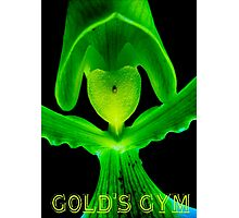 Gold's Gym Photographic Print