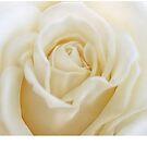 white rose by yvonne willemsen