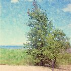 Beach Tree by Francis LaLonde