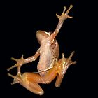 Frog by Josie Jackson
