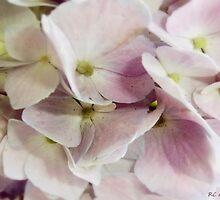 Verging on Violet by RC deWinter